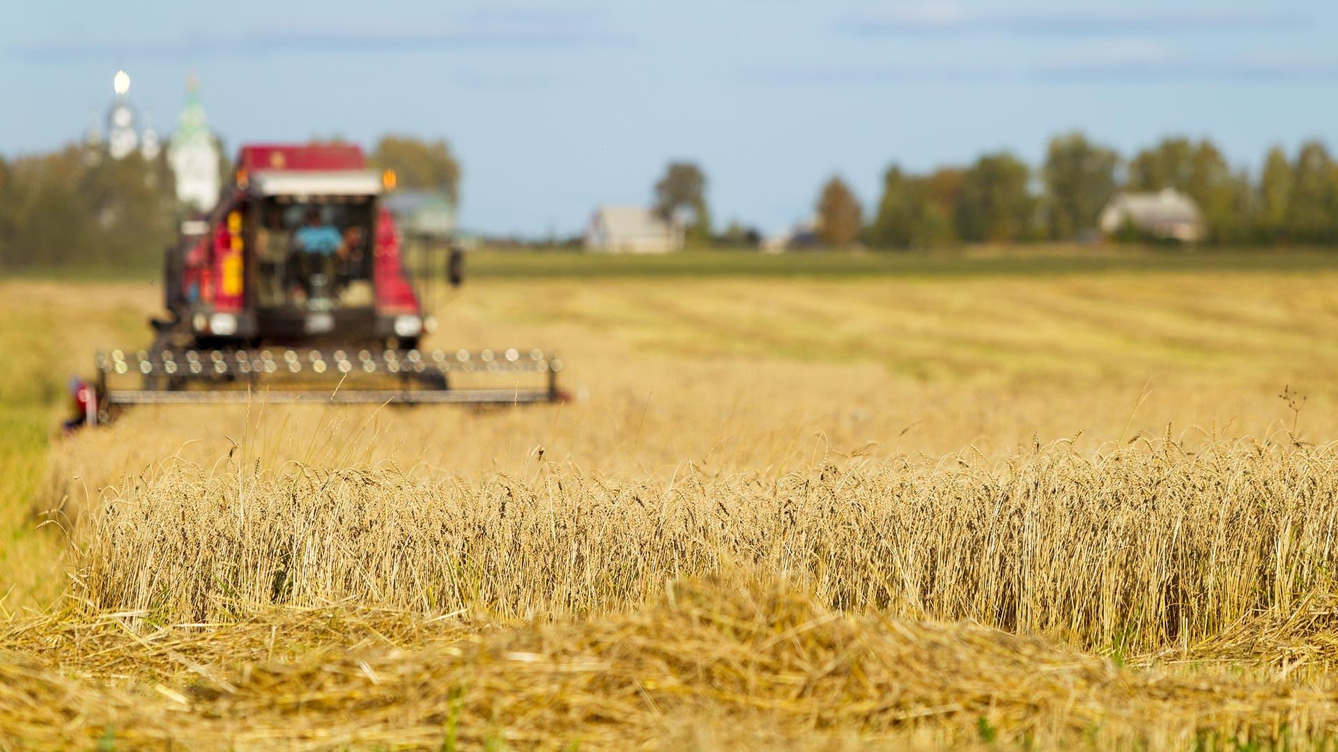 linea agricola